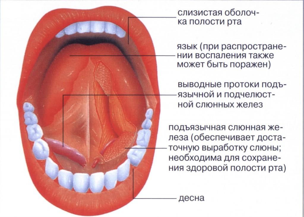 Темное пятно на десне около зуба – Здоровье полости рта